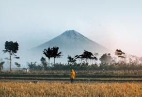 סדר מתוך כאוס בצלו של הר געש מעשן