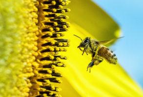 תרגילי החשבון של הדבורים